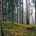 ppwc-local-8-letter-to-elected-officials-about-health-of-forest-industry